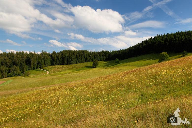 Uhrwaldpfad Rohrhardsberg Schwarzwaldlandschaft