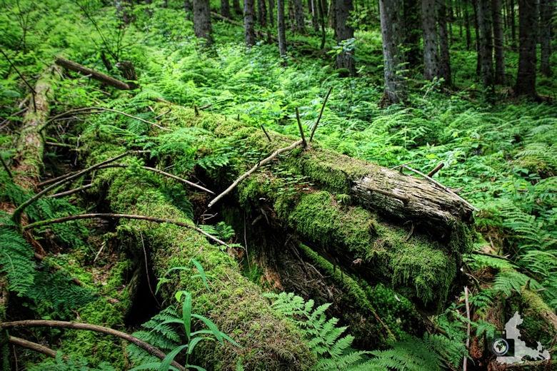 Uhrwaldpfad Rohrhardsberg Uriger Wald