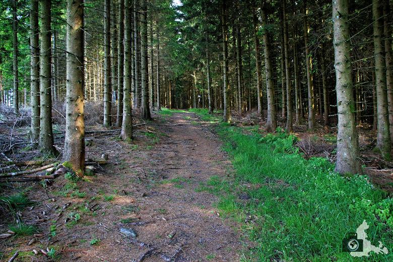 Uhrwaldpfad Rohrhardsberg Waldweg