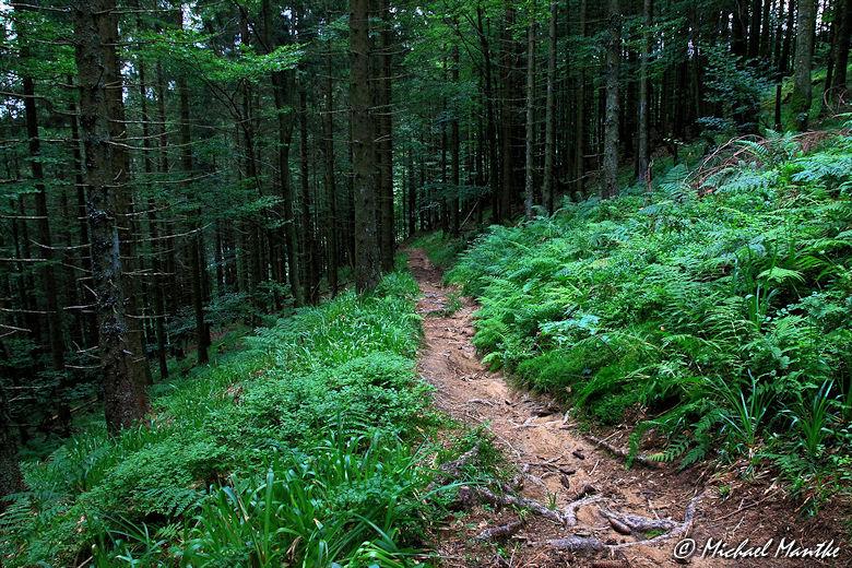 Unterwegs nach Horben Abstieg vom Schauinsland Waldweg