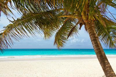 Genieße das Leben am Strand