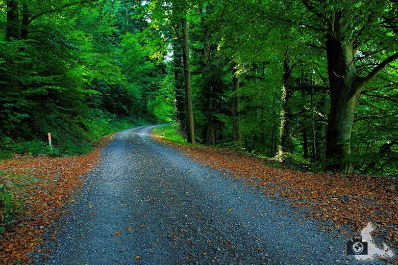Rundwanderweg Münstertal - Herbstlicher Waldweg mit Laub