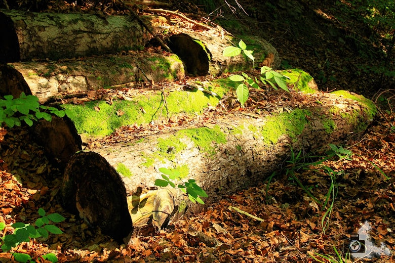 Holzstämme Laub Herbst Wald