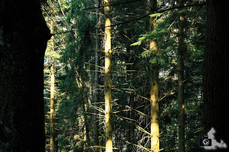 Baumstämme Kiefernstämme Wald