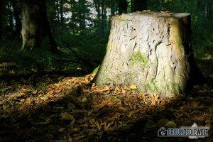 Canon EOS 760D Bilder - Impressionen Waldspaziergang