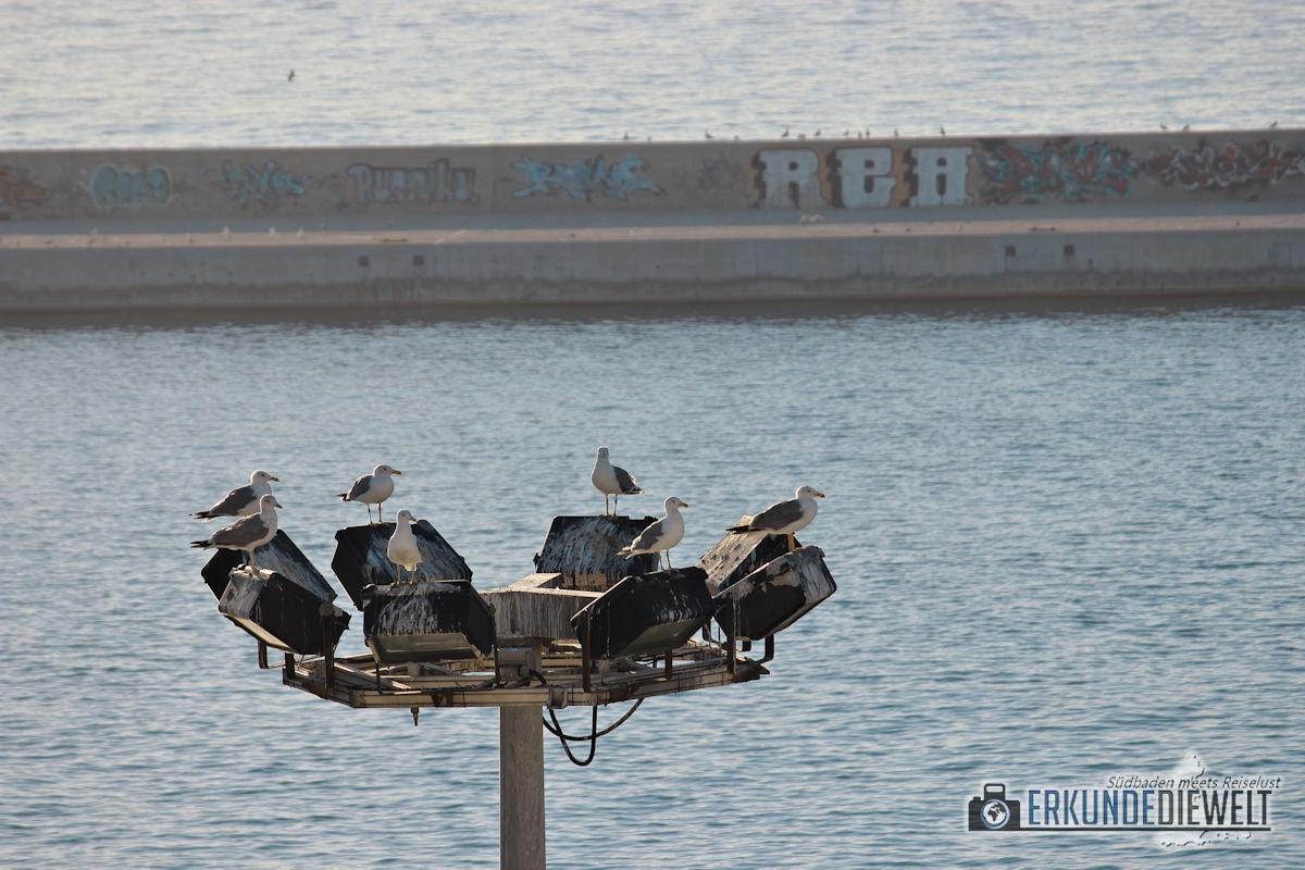 Mittelmeer Kreuzfahrt - Möwen am Hafen