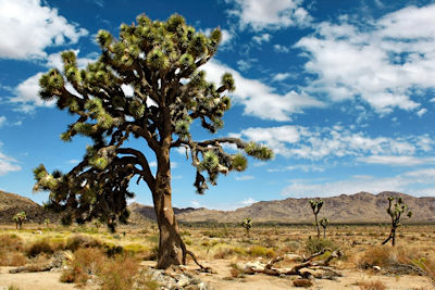 Joshua Tree Nationalpark, USA