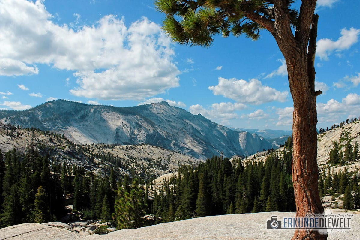 Tioga Road, Yosemite Nationalpark, Kalifornien, USA