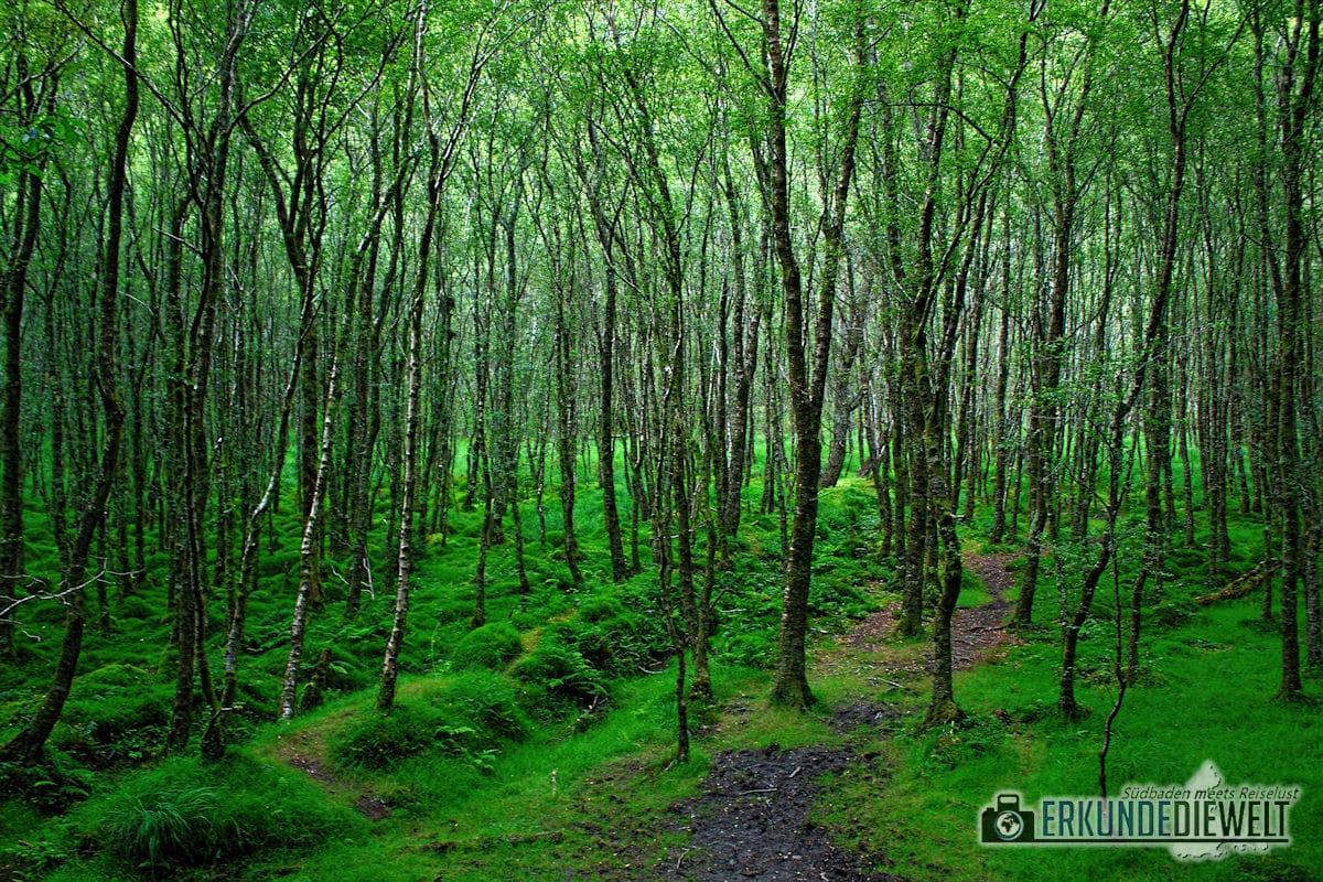 Glendalough, Wicklow Mountains, Irland