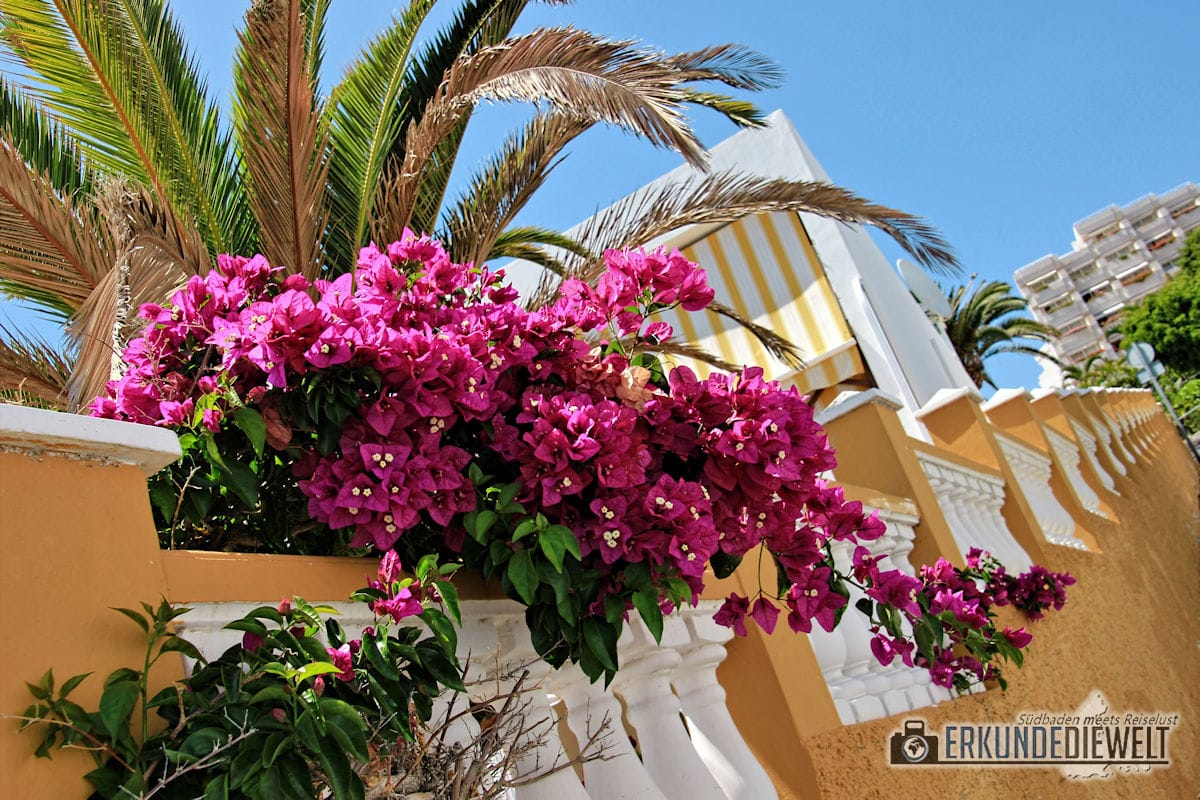 15spa0021-tenerife-flowers