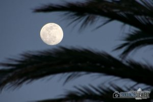 15spa0024-tenerife-full-moon-palm-blue-hour