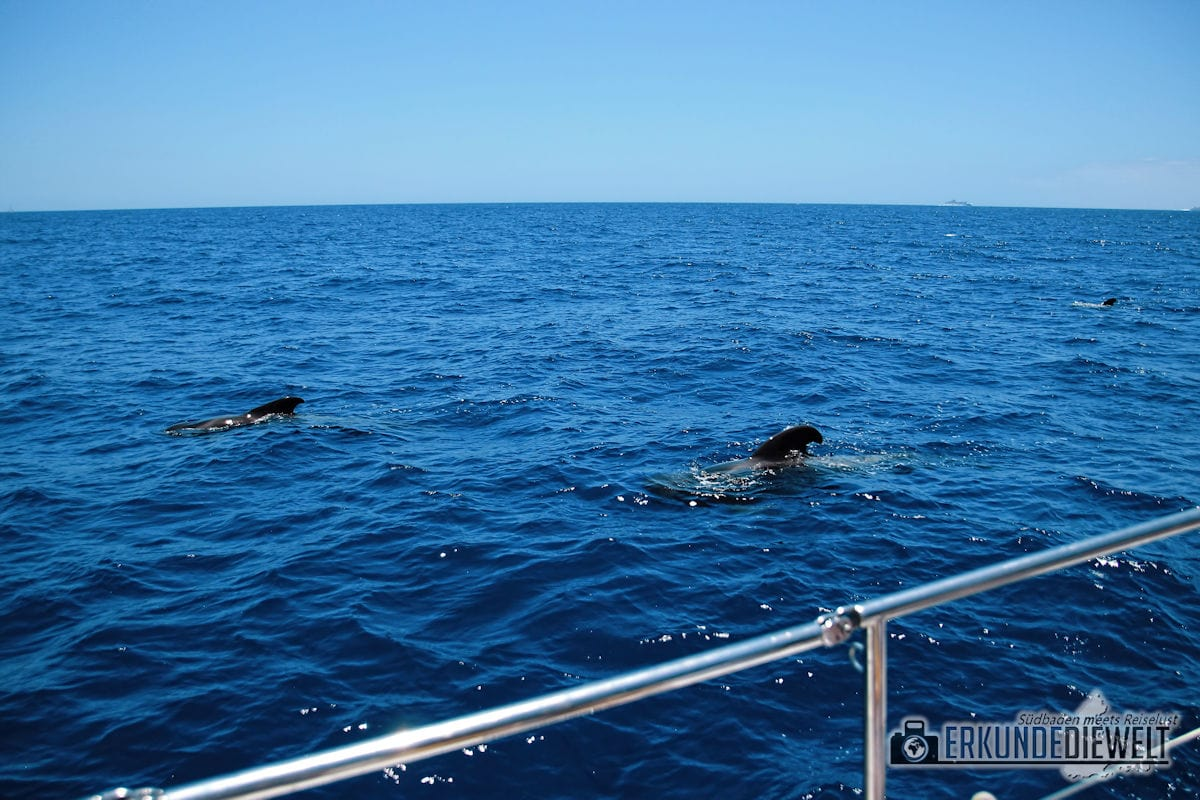 15spa0029-tenerife-whale-watching