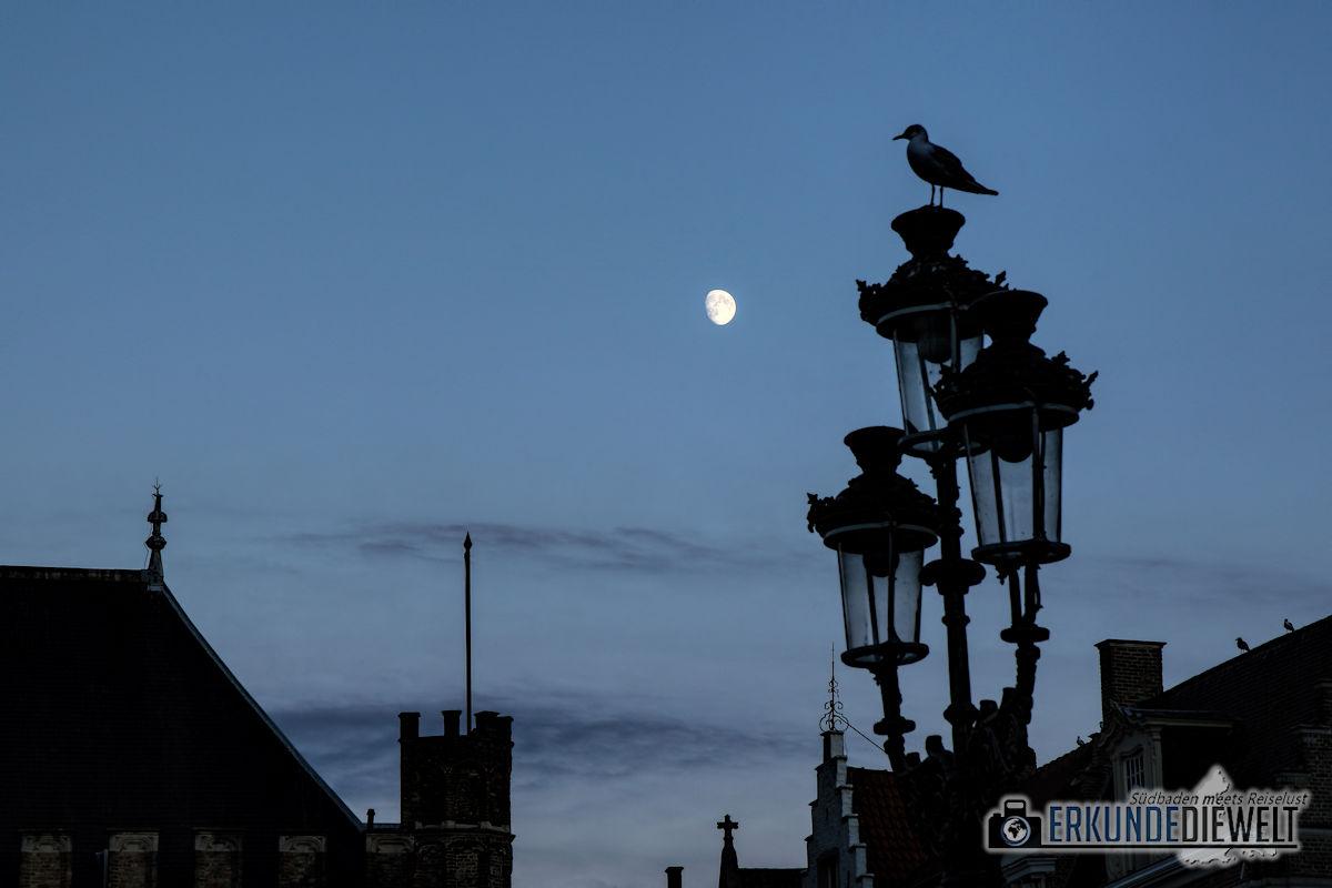 Mond vor Laterne mit Taube, Brügge, Belgien