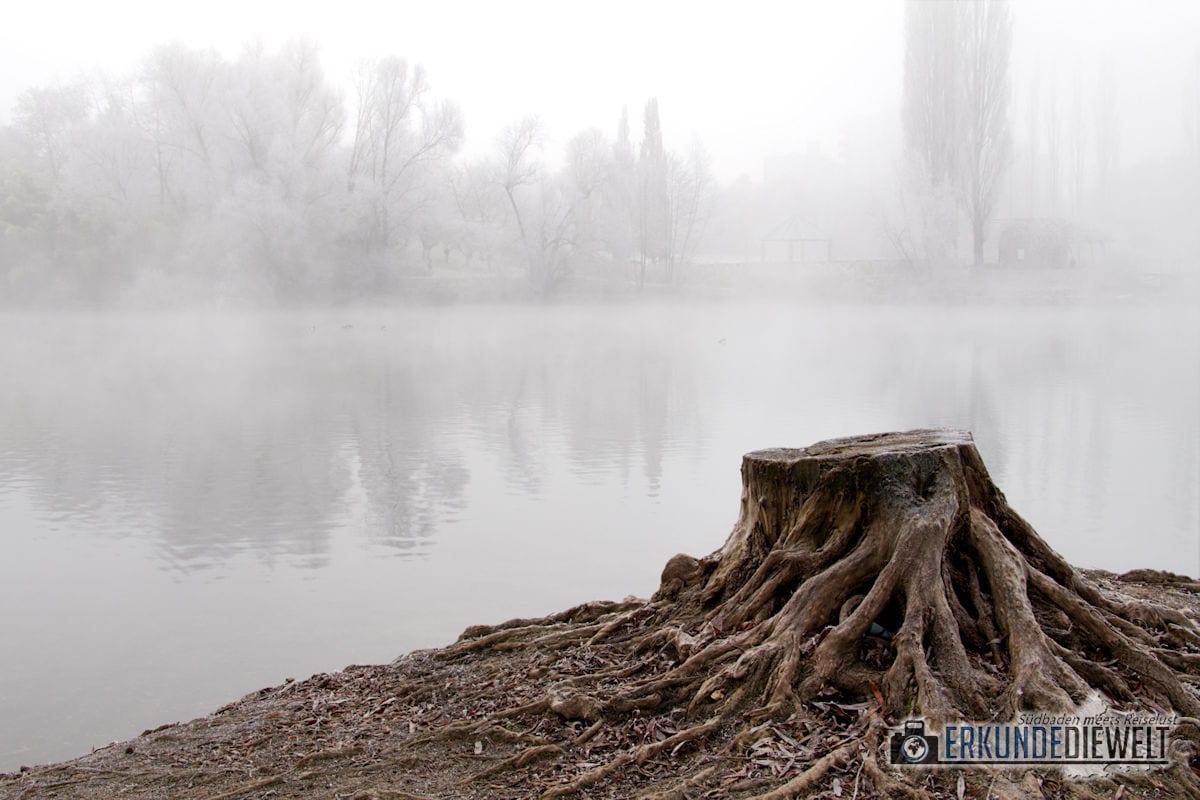 Canon EOS 80D Beispielbilder - Winternebel im Seepark Freiburg