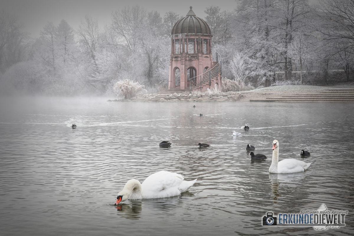 Fotowalk #1 - Winternebel im Seepark Freiburg