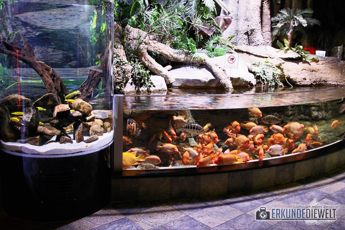 Dubai Mall - Aquarium