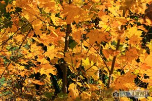 Herbstbilder mit dem Canon 70-300 L IS USM