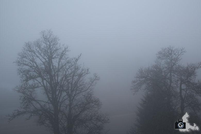 Feldberger Hof im Nebel