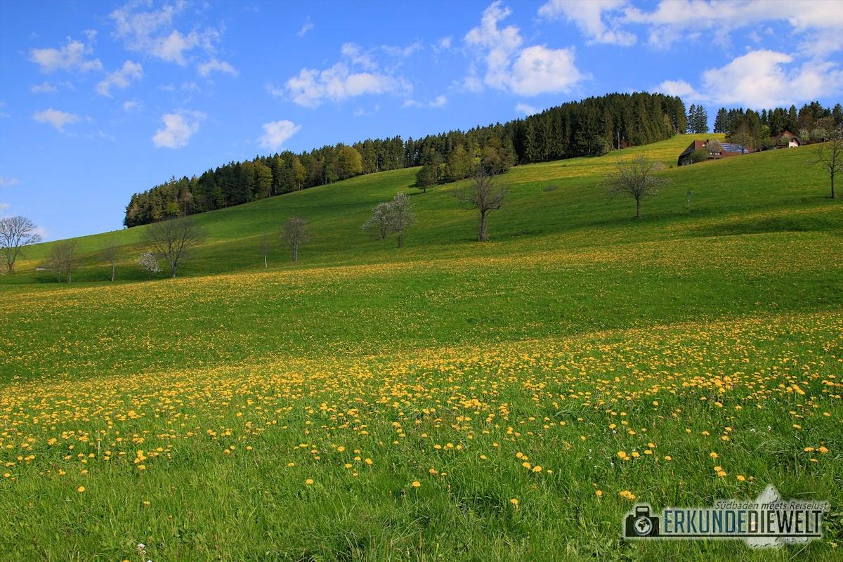 15DEU0096-schwarzwald-wanderung-nach-st-peter