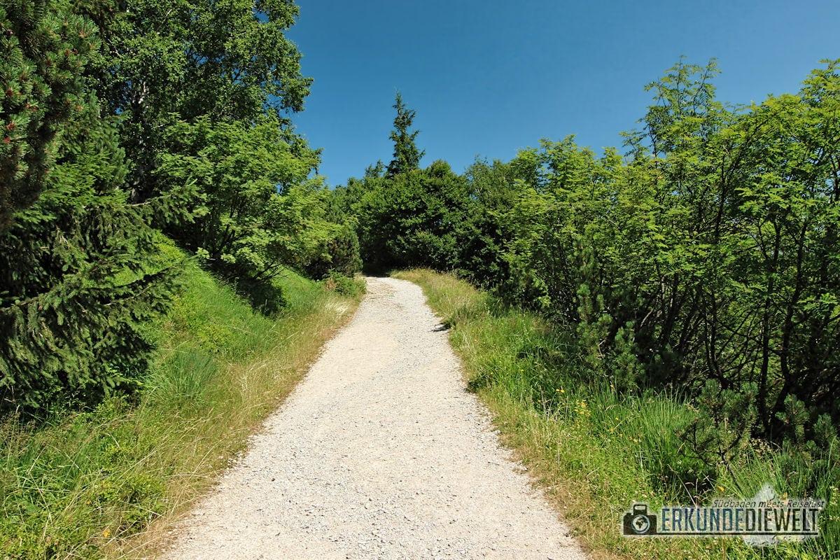 15DEU0117-nationalpark-schwarzwald