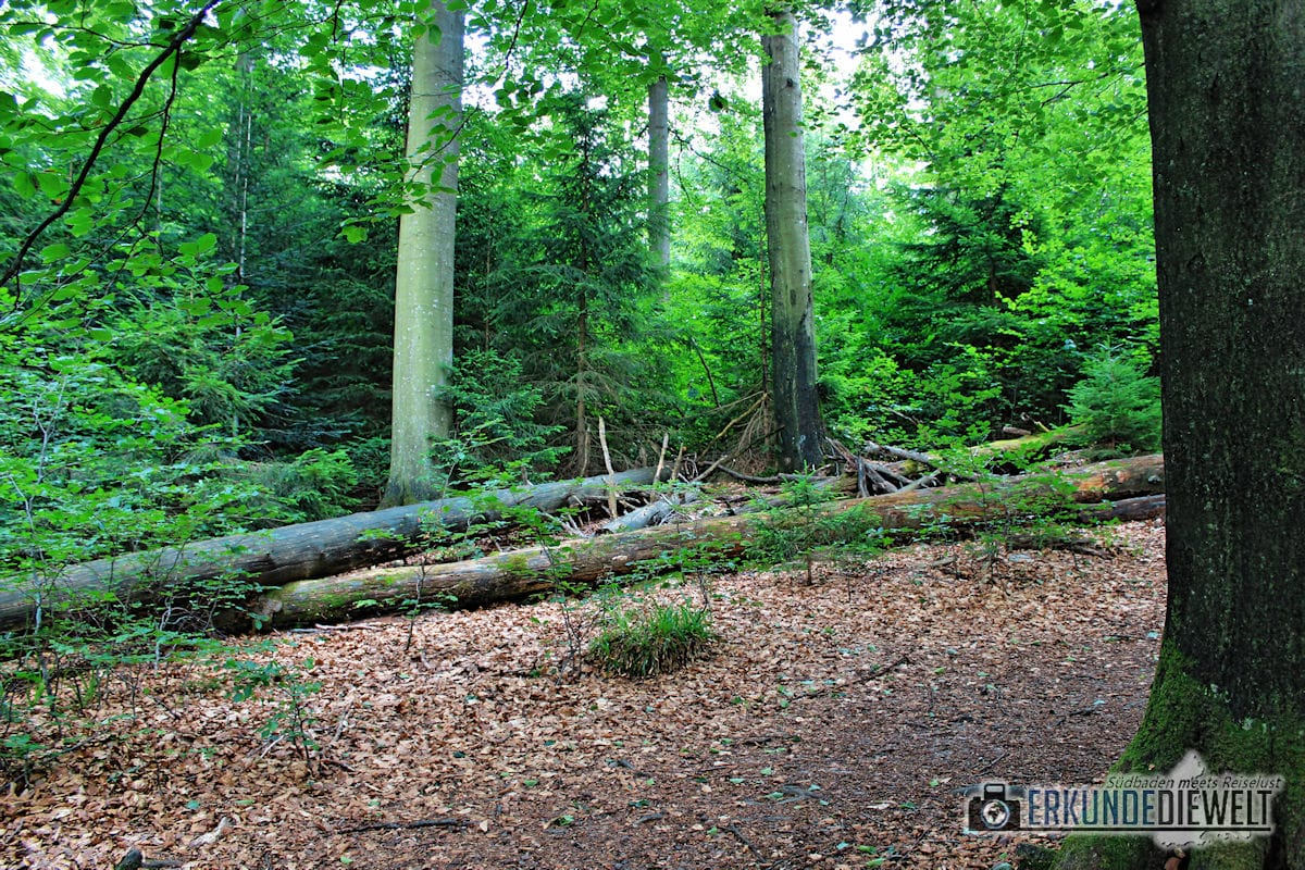 Bannwald, Nationalpark Schwarzwald, Deutschland