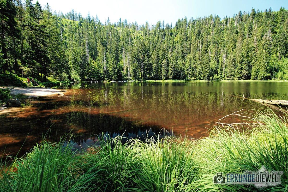 Wilder See, Nationalpark Schwarzwald, Deutschland