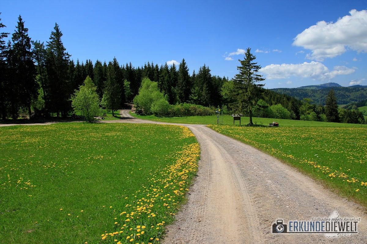 Wanderung Martin Heidegger Rundweg, Schwarzwald, Deutschland