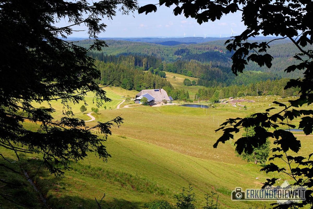 16DEU0155-schwarzwald-wanderung-uhrwaldpfad-rohrhardsberg