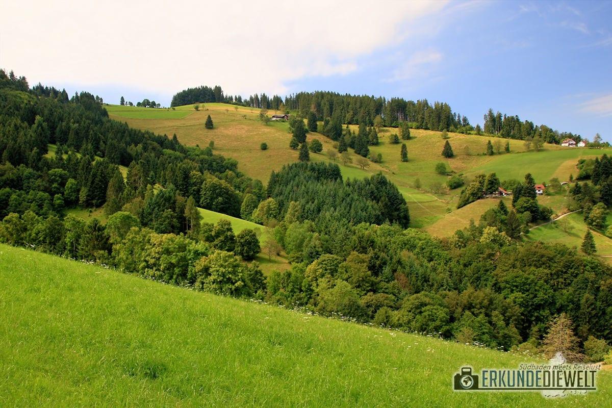 16DEU326-schwarzwald-schauinsland-wanderung-1200