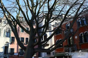 Baum, Venedig, Italien