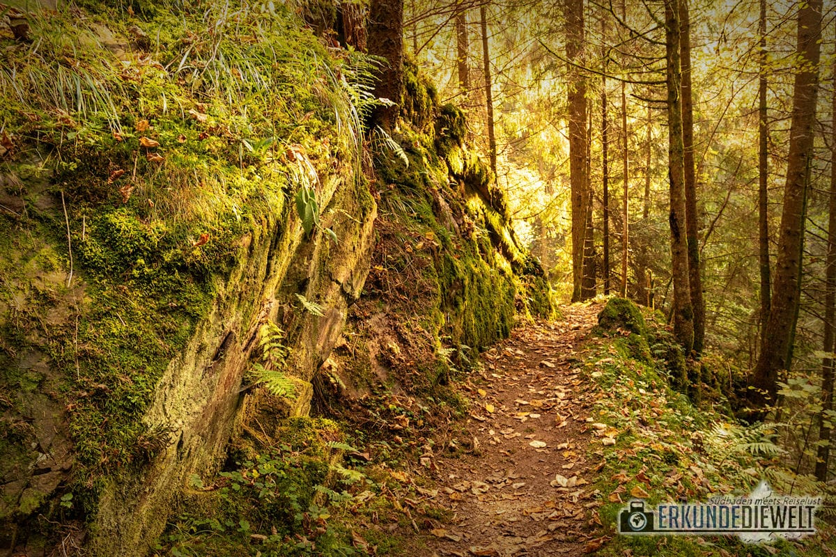 Genießerpfad Rötenbachschlucht im Herbst, Schwarzwald
