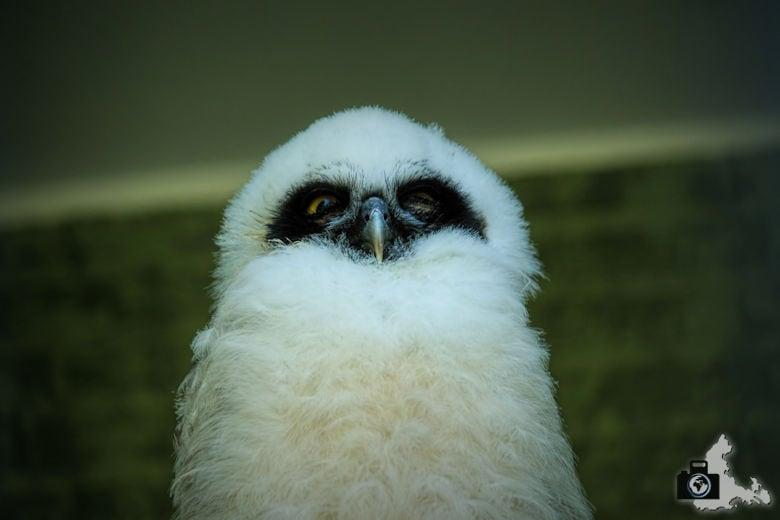 Zoo Antwerpen, Belgien
