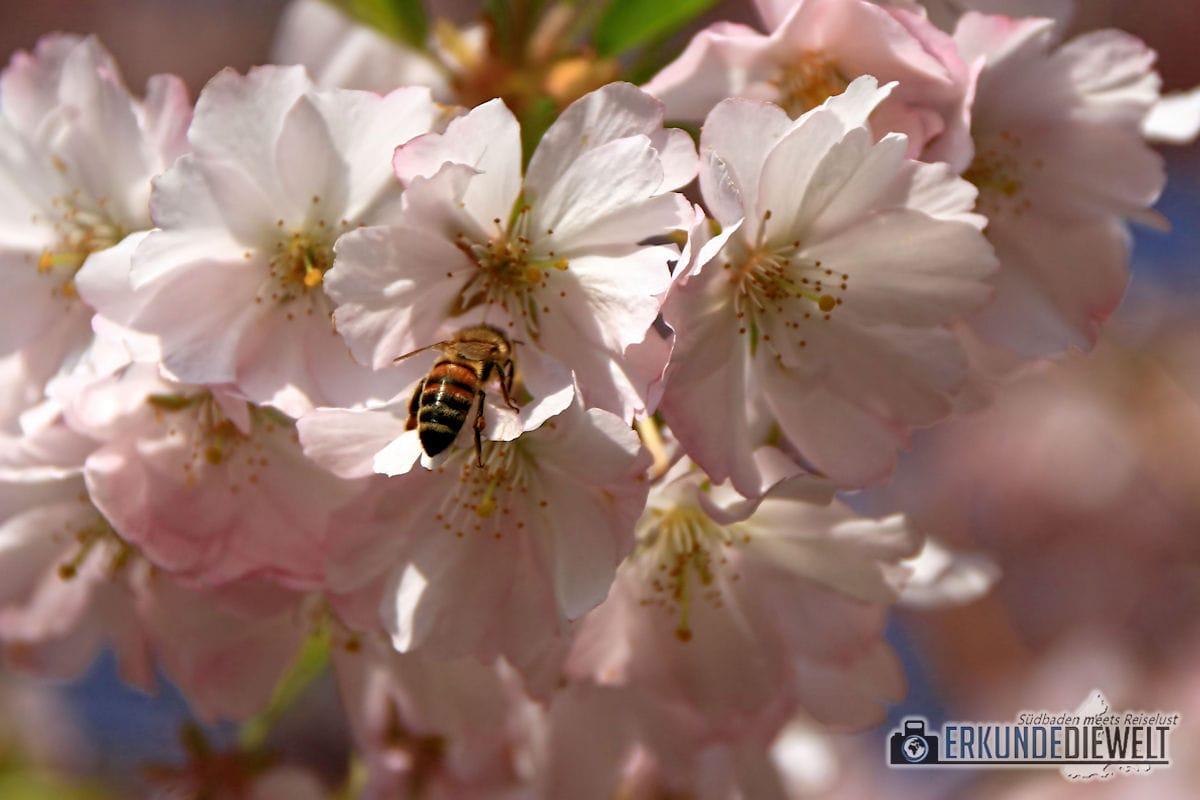Beispiel für kurze Belichtungszeit - Insekt
