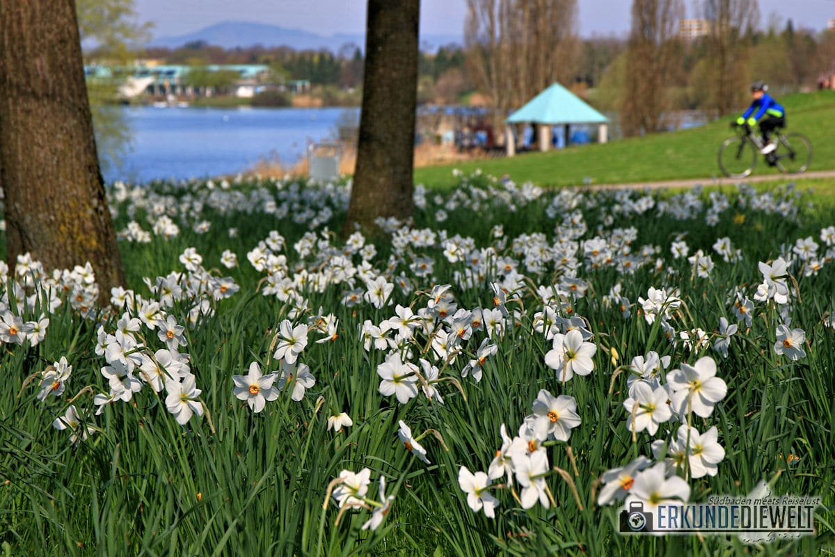 Frühlingserwachen am Seepark in Freiburg