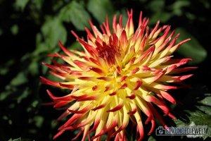 Frühlingserwachen, Blume, Insel Mainau