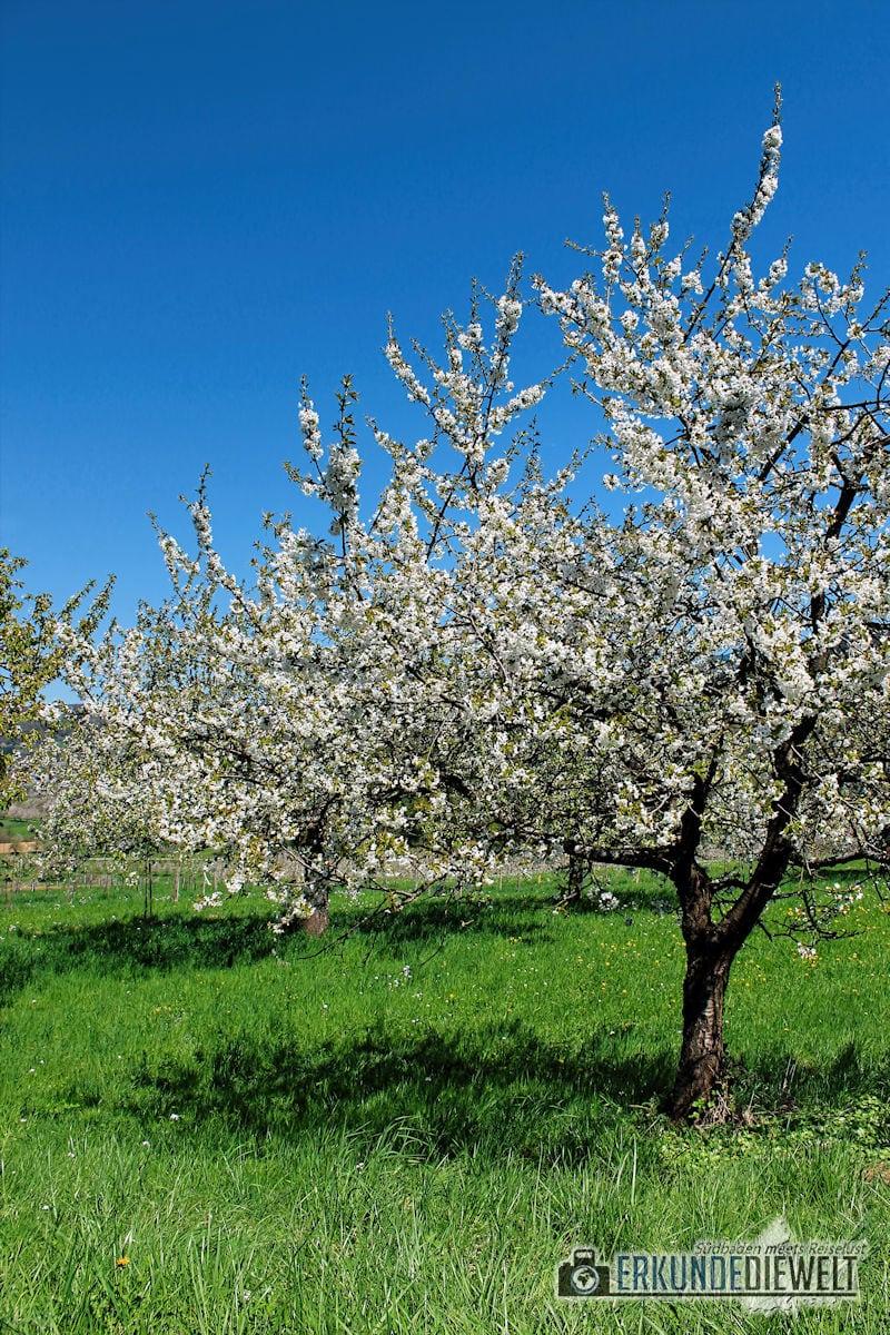 Frühling in Südbaden, Deutschland