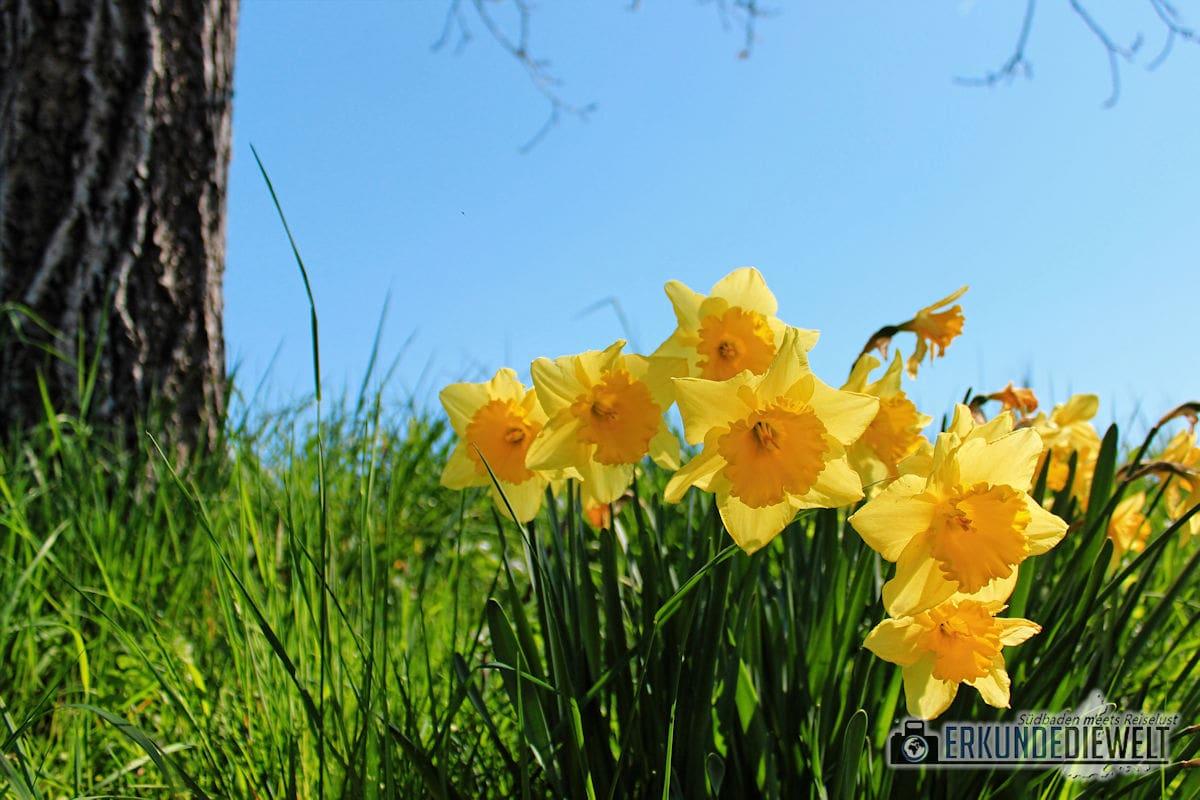 Frühlingserwachen, Markgräflerland, Deutschland