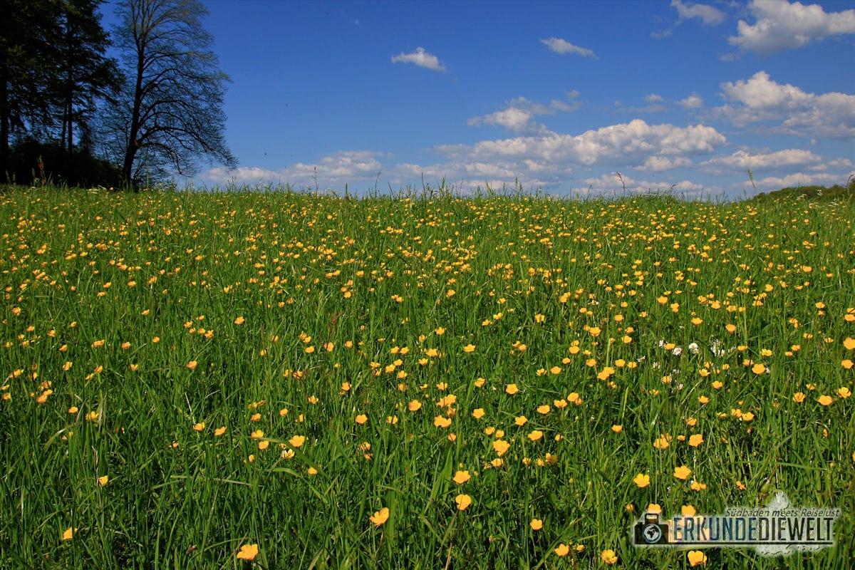 Wiese im Frühling, Deutschland