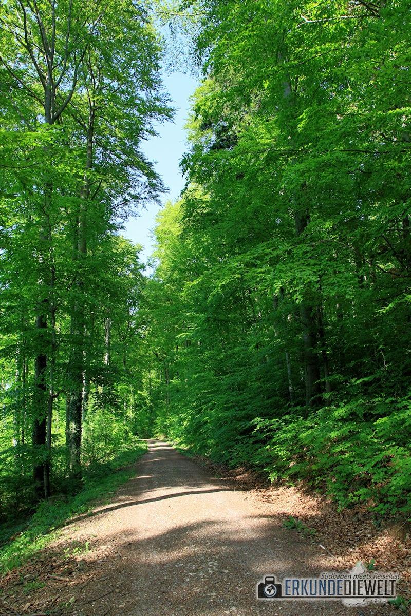 Wald im Frühling, Deutschland