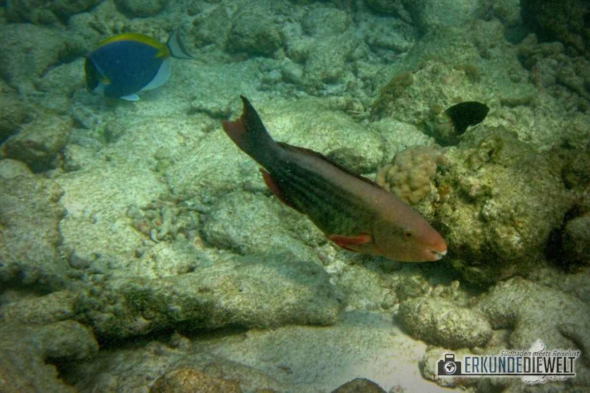 Unterwasserkamera Canon PowerShot D30 - Beispielbild Malediven