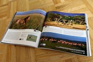 buchempfehlung-safari-fotografieren