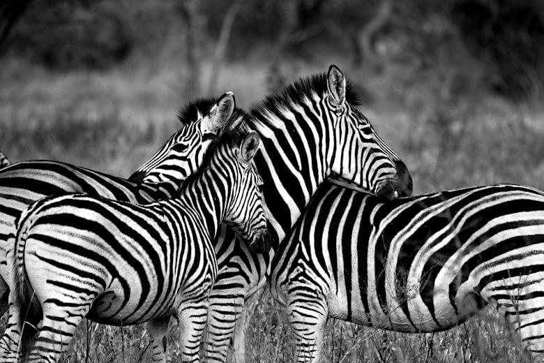 safari-afrika-fotoausruestung
