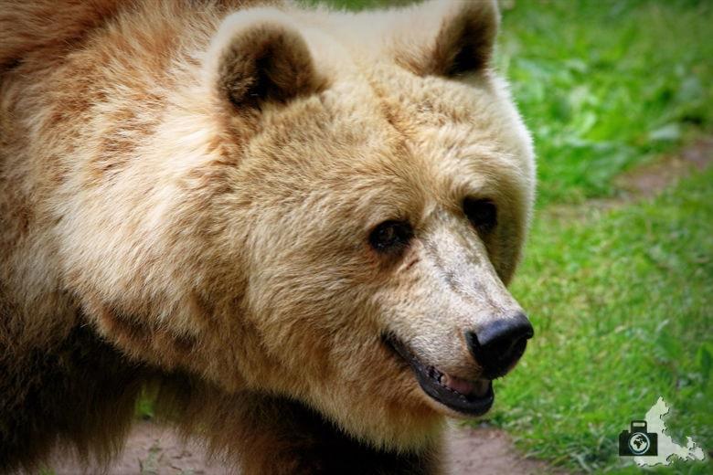 Bärenpark bei Stuer