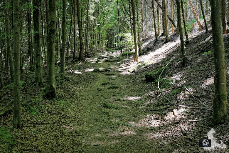 buehlertal-gertelbach-rundweg-waldweg