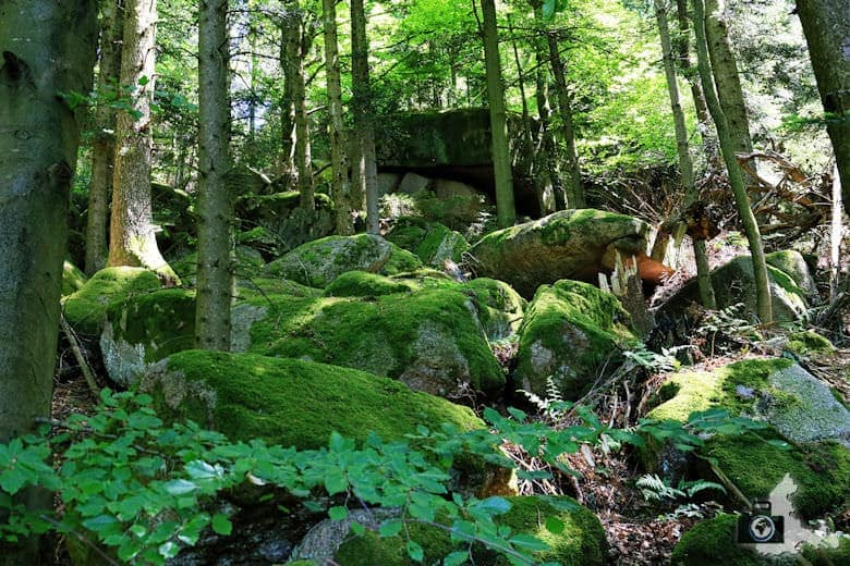 buehlertal-gertelbach-rundweg-wald-felsen