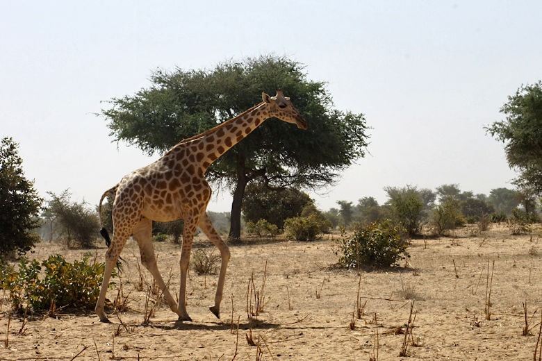 Steckbrief Burkina Faso
