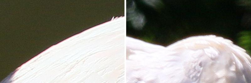 Canon EF 70-300mm 1:4-5,6 IS II USM - Chromatische Abberation