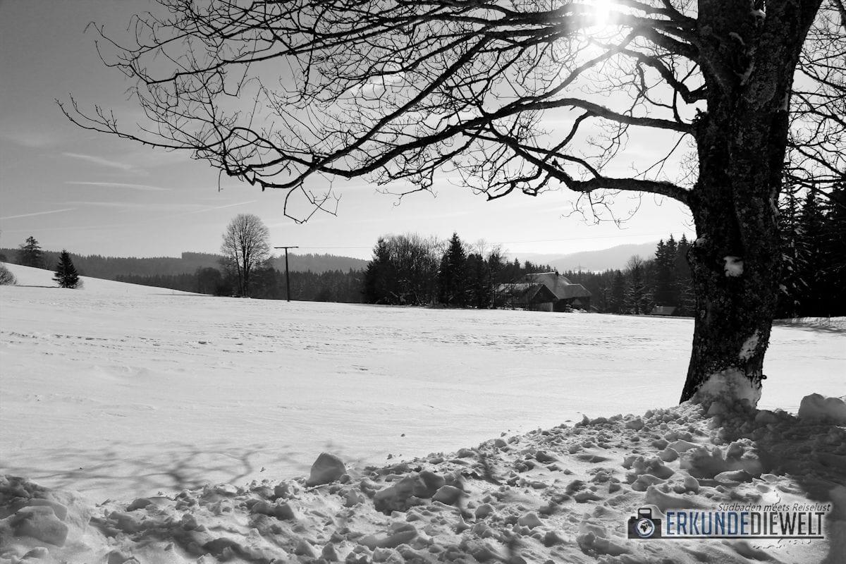 16FRE0062-winter-schwarzwald-breitnau-1200