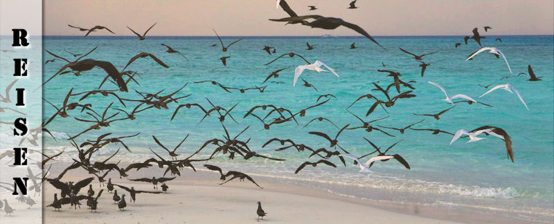Reisebericht Malediven Sandbank Picknick