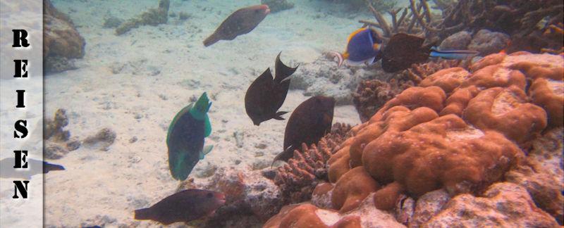 Reisebericht Malediven Ukulhas - Schnorchel Safari